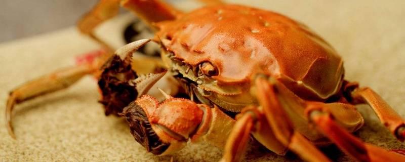 三两的螃蟹要蒸多久(三两重的螃蟹要蒸几分钟)