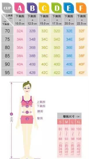 女生胸的尺码对照表插图