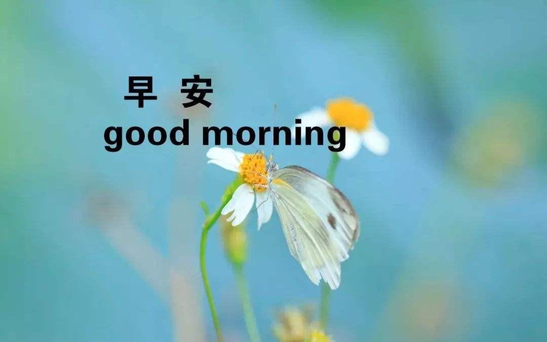 早安最短精句(早安最短精句配图)