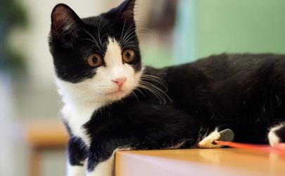 猫抓伤后11天死了我怎么办