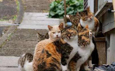 被猫抓伤多少天过危险期是家猫(被猫抓伤多久过安全期)