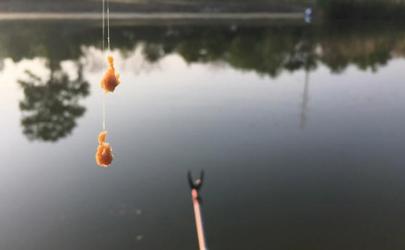 2021年休渔时间是几月到几月(2020年休渔期是几月份到几月份)