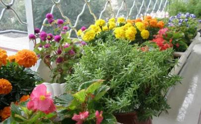 冬天常见的花有什么(冬天有哪种花)