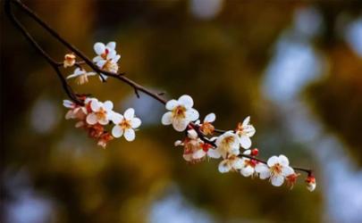 今年过年立春了吗2022(今年立春是哪一天2022)