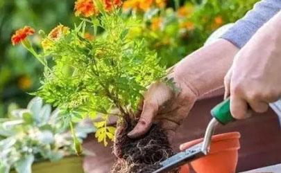 活性炭可以做花土吗(花土里放活性炭好不好?)